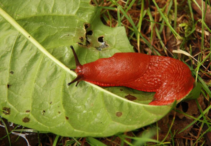Les conseils de jardin pour faire fuir les limaces - Comment faire fuir les taupes de mon jardin ...