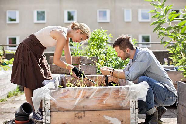 Couple en train de jardiner dans un potager en bac surélevé